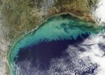 Golfo del Messico: crescita record per la zona morta