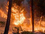 Incendi: in un mese scomparsa stessa superficie di boschi del 2016