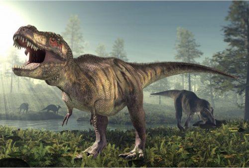 I Tirannosauri erano lenti: la ricerca dell'Università di Manchester