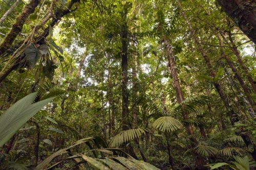 """Clima: gli alberi della Foresta Amazzonica """"fanno piovere"""""""