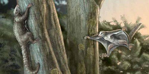 Scoperti i primi mammiferi vissuti ai tempi dei dinosauri