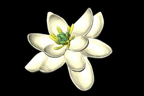 Ricostruito in laboratorio il primo fiore nato sulla Terra