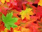 Equinozio di autunno 2017: perché è il 22 e non il 21 settembre?