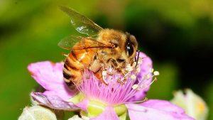 Natura: negli ultimi anni è scomparso il 76% di insetti volanti