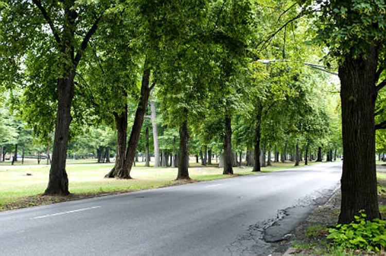 Gli alberi in città crescono più velocemente, lo studio