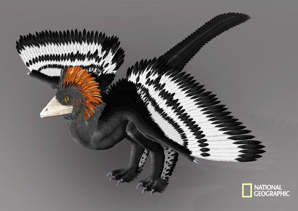 Anchiornis, ricostruite le caratteristiche dell'antico dinosauro piumato