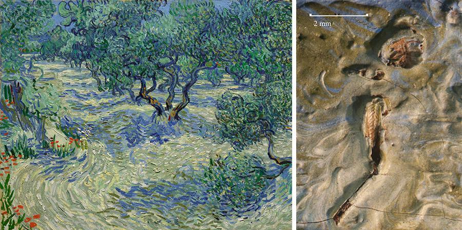 Cavalletta nel quadro di Van Gogh, era nascosta da 128 anni