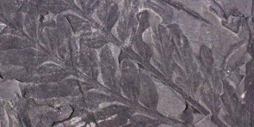 Antartide: scoperte tracce di foreste nascoste dai ghiacci