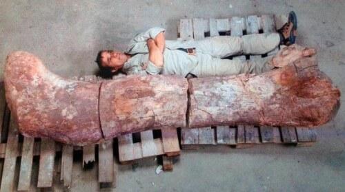 Trovati i resti del dinosauro più grande del mondo