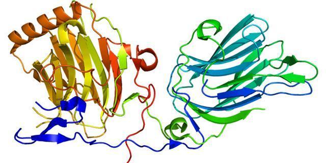 Trovata la superproteina che blocca il cancro