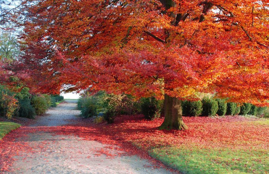 Perché in Autunno le foglie cambiano colore?