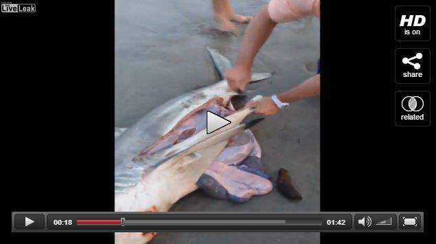 Pazzesco salvataggio di tre squali neonati in Australia