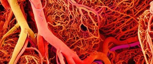 Costruiti in laboratorio i primi vasi sanguigni in 3D