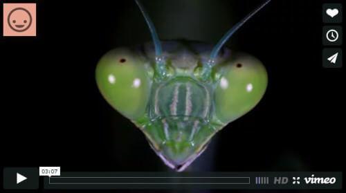 A tu per tu con gli insetti: video pazzesco