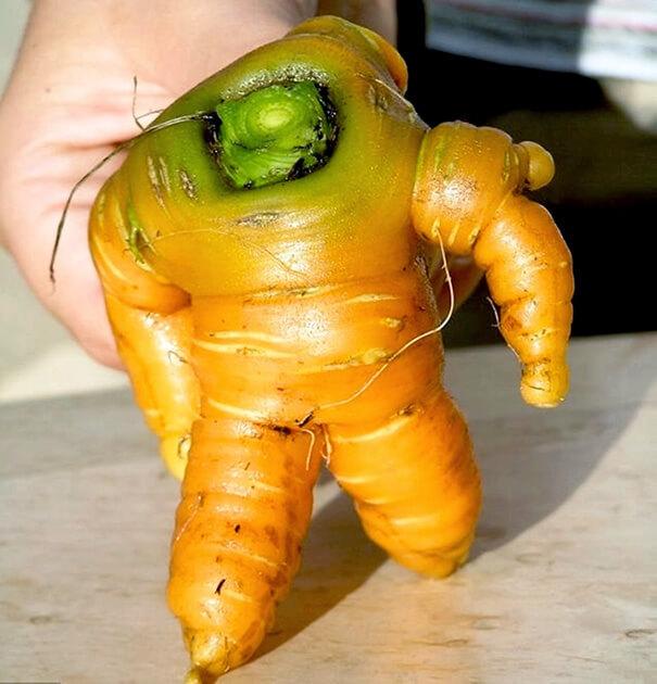 Verdure dalle forme assurde, dieci immagini che vi lasceranno a bocca aperta