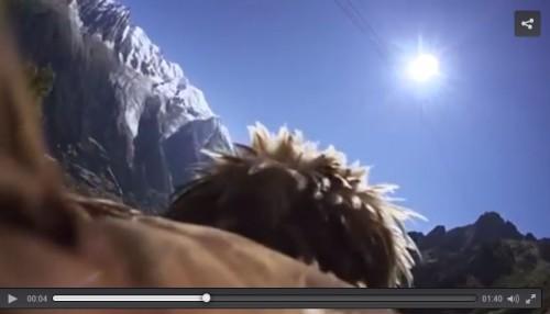 Montano una GoPro sull'acquila, immagini bellissime da Chamonix