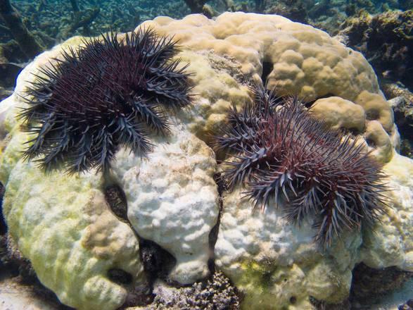 Come l'aceto può salvare le barriere coralline
