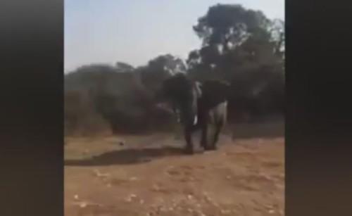 Safari pericoloso, elefante attacca i turisti