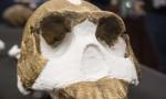 Homo Naledi, le caratteristiche delle nuova specie di ominide