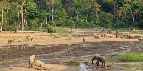 Il petrolio rischia di distruggere un terzo del patrimonio UNESCO