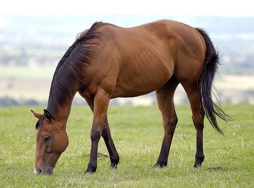 La furbizia e l'intelligenza dei cavalli