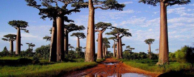 Un progetto italiano preserva 1700 ettari di foresta pluviale in Madagascar