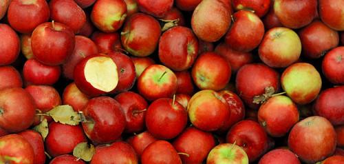 Greenpeace: Pesticidi nell'83% delle mele