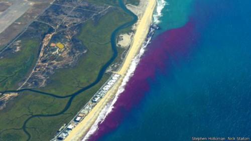 Il colorante rosa che permette di tracciare l'inquinamento