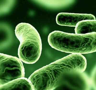 Cina: batteri resistenti ad antibiotici
