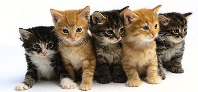 Gatti, perché sembrano meno affettuosi dei cani?