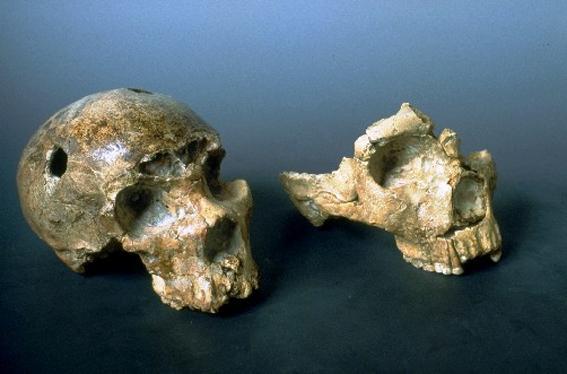 L'uomo di Neandhertal è arrivato a Roma 250mila anni fa