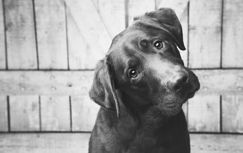Il motivo per cui i cani inclinano la testa