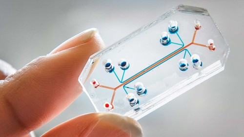 Cancro, inventato il biochip che individua i tumori