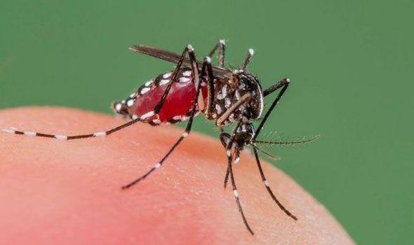 Zanzare Ogm, una soluzione contro la malaria