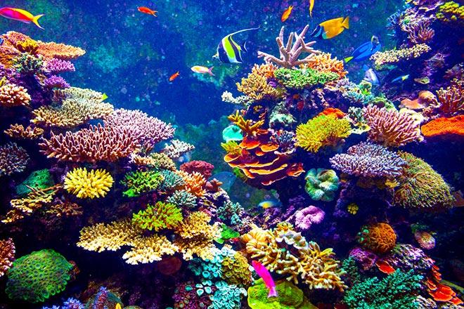 NASA, presto una missione per esplorare la barriera corallina