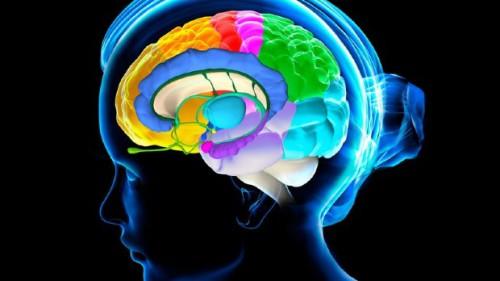 Cervello, scoperto il nuovo gene della memoria