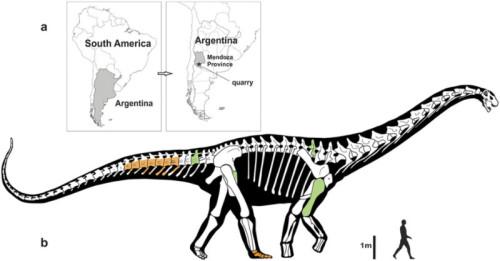 Dinosauro dalle dimensioni spaventose scoperto in Argentina