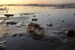 Clima: mari troppo caldi, le specie anfibie si spostano sulla terra