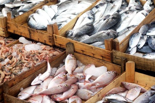Pesca: ecco perché i dati ufficiali sono del tutto inattendibili