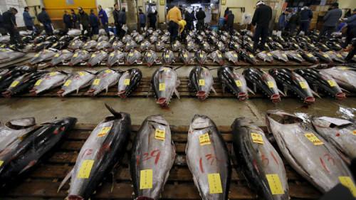 Allarme oceani, i pesci scompaiono a velocità record
