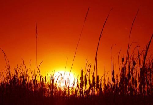 Temperature record anche nel 2016? L'allarme degli studiosi