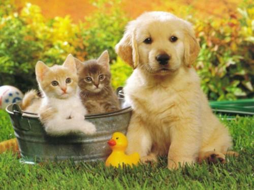 Cani o gatti, chi ci ama di più?