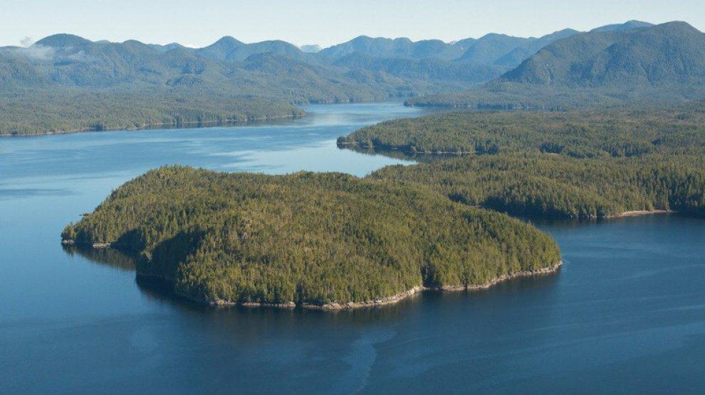 British Columbia, è salva la foresta del grande orso