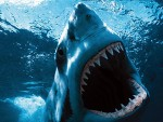 Il segreto per denti eterni è nascosto nelle fauci degli squali