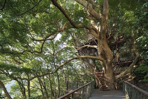 Giappone: la casa sull'albero più grande del Paese, ecco Kusukusu