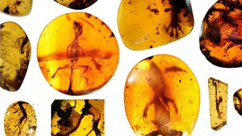 Archeologia, rinvenute antiche lucertole intrappolate nell'ambra