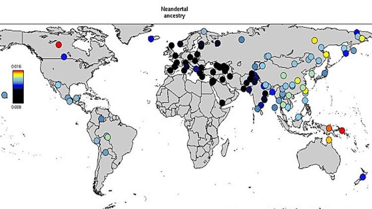 Neanderthal o Denisovans: una mappa del mondo rivela la nostra eredità genetica