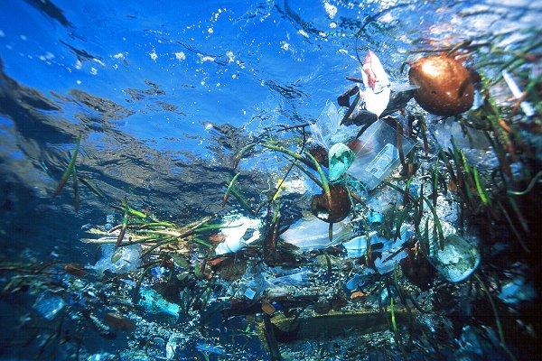 Inquinamento: scoperto il batterio che si nutre di plastica
