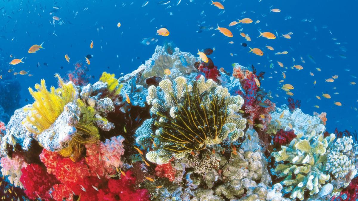 Grande barriera corallina a rischio estinzione, il pericolo è lo sbiancamento