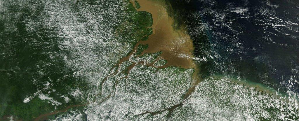 Rio delle Amazzoni: scoperta una barriera corallina di 1000 km